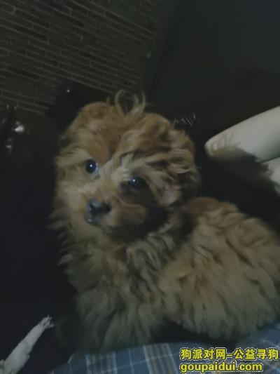 金华寻狗,帮忙找狗,五马塘村走丢,它是一只非常可爱的宠物狗狗,希望它早日回家,不要变成流浪狗。