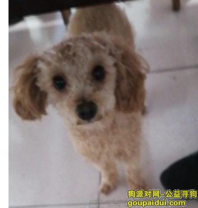 唐山寻狗启示,找到啦!!!感谢!!!,它是一只非常可爱的宠物狗狗,希望它早日回家,不要变成流浪狗。