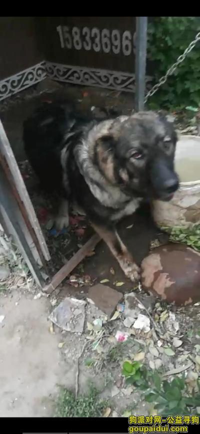 【邢台找狗】,找狗,母高加索一只,被盗的,,它是一只非常可爱的宠物狗狗,希望它早日回家,不要变成流浪狗。