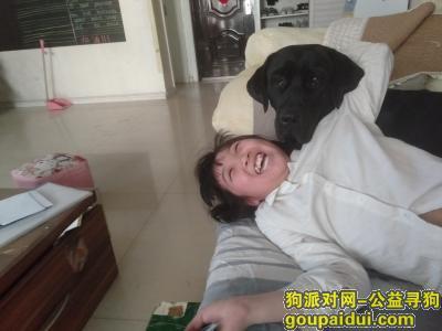 【太原找狗】,6月3日早上走丢黑色拉布拉的公狗,眼睛发红,它是一只非常可爱的宠物狗狗,希望它早日回家,不要变成流浪狗。