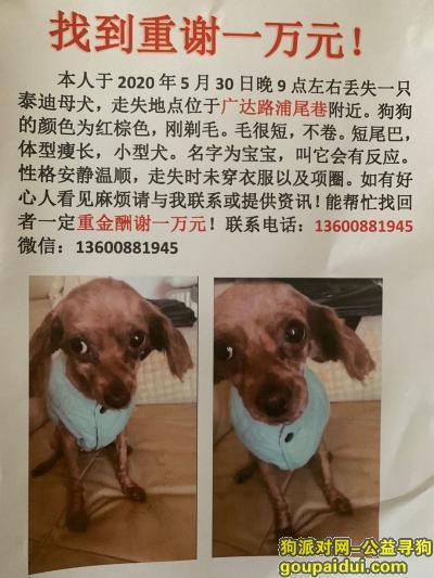 福州寻狗启示,福州市台江区台江区广达路浦尾路酬谢一万元寻找泰迪,它是一只非常可爱的宠物狗狗,希望它早日回家,不要变成流浪狗。