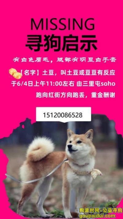 北京找狗,2岁母柴犬三里屯附近走丢,它是一只非常可爱的宠物狗狗,希望它早日回家,不要变成流浪狗。