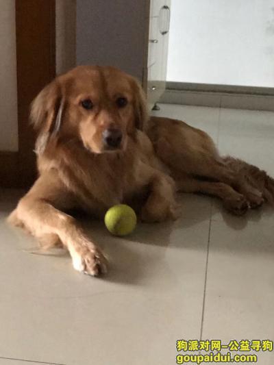 【上海找狗】,狗狗玩了两天自己回来了,它是一只非常可爱的宠物狗狗,希望它早日回家,不要变成流浪狗。