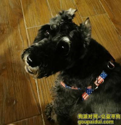 【重庆捡到狗】,6月7日左右捡到一只雪拉瑞,它是一只非常可爱的宠物狗狗,希望它早日回家,不要变成流浪狗。