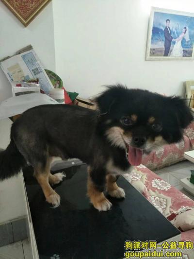 【深圳找狗】,深圳壹城中心寻狗狗,重金酬谢!,它是一只非常可爱的宠物狗狗,希望它早日回家,不要变成流浪狗。