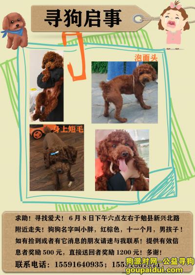 【汉中找狗】,小胖,快点回家吧,泡面头,身上没毛,它是一只非常可爱的宠物狗狗,希望它早日回家,不要变成流浪狗。