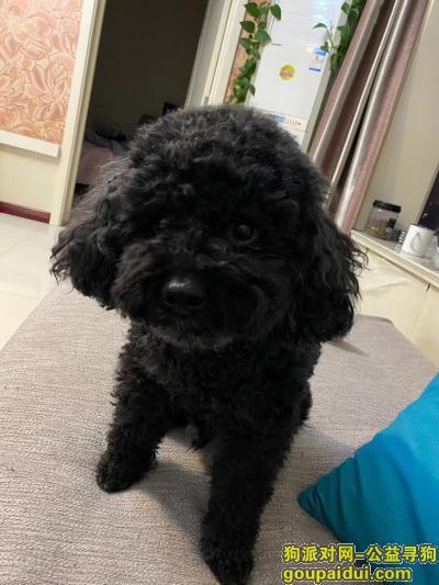 太原寻狗启示,黑宝~太原印象城一6月2号走失,它是一只非常可爱的宠物狗狗,希望它早日回家,不要变成流浪狗。