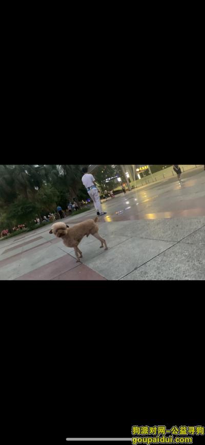 【重庆找狗】,冉家坝龙湖医院寻1只棕色泰迪,造型像小绵羊,它是一只非常可爱的宠物狗狗,希望它早日回家,不要变成流浪狗。