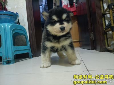安顺寻狗启示,安顺找狗:麻烦大家帮忙注意下狗狗很乖很听话的,它是一只非常可爱的宠物狗狗,希望它早日回家,不要变成流浪狗。