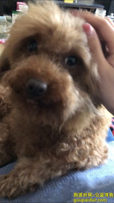 【兰州找狗】,兰州安宁区十里店附近遗失爱犬,它是一只非常可爱的宠物狗狗,希望它早日回家,不要变成流浪狗。
