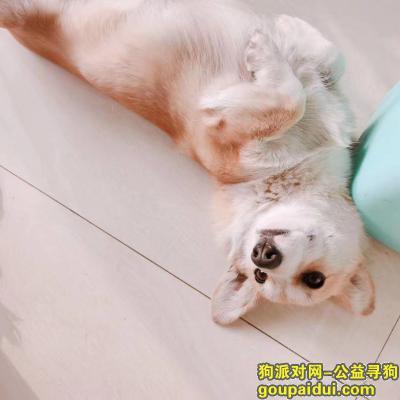 沧州寻狗启示,寻找小狗丢失小狗别人小狗帮忙别人找一找小狗。,它是一只非常可爱的宠物狗狗,希望它早日回家,不要变成流浪狗。