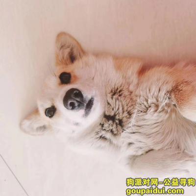 【沧州找狗】,丢失小狗寻找小狗。特别喜欢跟人。希望大家帮他们找找吧。,它是一只非常可爱的宠物狗狗,希望它早日回家,不要变成流浪狗。