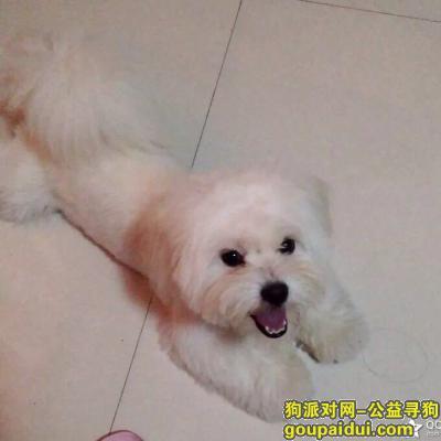 苏州找狗,张家港2000元酬谢寻找哈巴狗7岁13斤重,它是一只非常可爱的宠物狗狗,希望它早日回家,不要变成流浪狗。