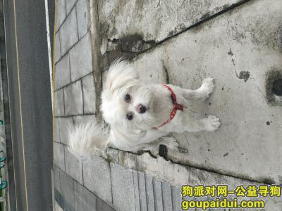重庆寻狗启示,重庆渝北区民心佳园地铁站附近捡到狗,它是一只非常可爱的宠物狗狗,希望它早日回家,不要变成流浪狗。