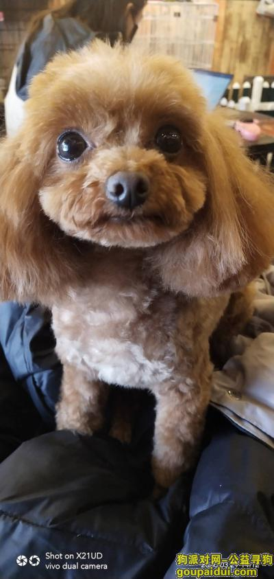 沈阳找狗,找狗,酬谢1000元,它是一只非常可爱的宠物狗狗,希望它早日回家,不要变成流浪狗。