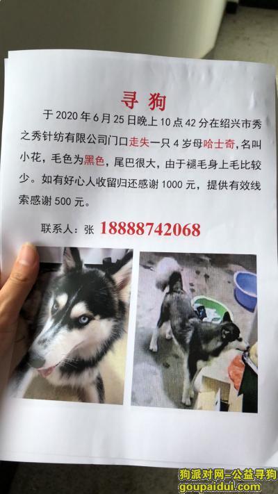 【绍兴找狗】,绍兴市越城区振兴路寻找哈士奇,它是一只非常可爱的宠物狗狗,希望它早日回家,不要变成流浪狗。