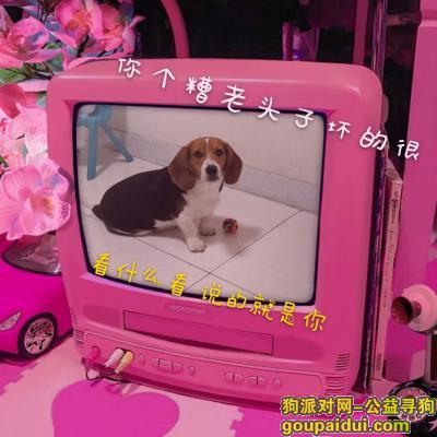已经找到  感谢各位!!,它是一只非常可爱的宠物狗狗,希望它早日回家,不要变成流浪狗。