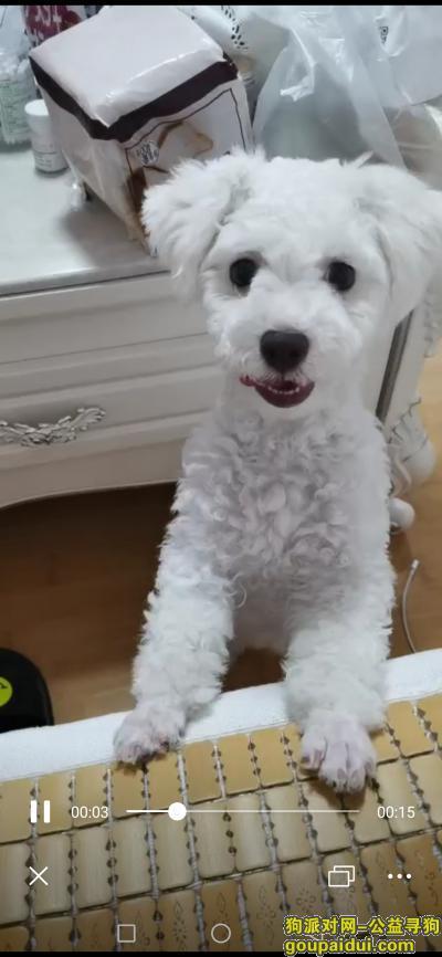 找到必有重谢,不食言!,它是一只非常可爱的宠物狗狗,希望它早日回家,不要变成流浪狗。