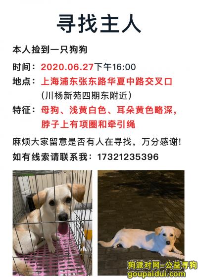 上海找狗,上海浦东张东路浅黄白色母狗狗寻找主人,它是一只非常可爱的宠物狗狗,希望它早日回家,不要变成流浪狗。
