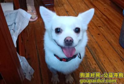 湘潭找狗,找狗狗了,拜托拜托!,它是一只非常可爱的宠物狗狗,希望它早日回家,不要变成流浪狗。