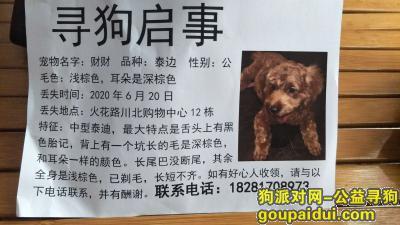 【南充找狗】,宝贝,请尽快回家,家人想你了!,它是一只非常可爱的宠物狗狗,希望它早日回家,不要变成流浪狗。