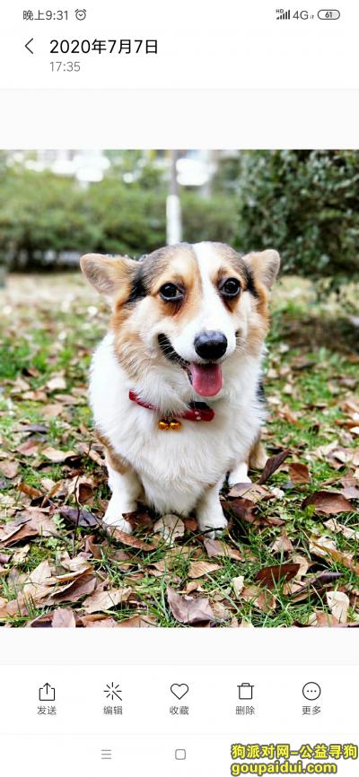 深圳丢狗,重金悬赏 重金酬谢,找LUCKY,它是一只非常可爱的宠物狗狗,希望它早日回家,不要变成流浪狗。