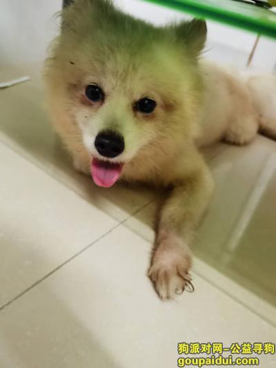广州捡到狗,番禺广场站附近,白色公狗。,它是一只非常可爱的宠物狗狗,希望它早日回家,不要变成流浪狗。