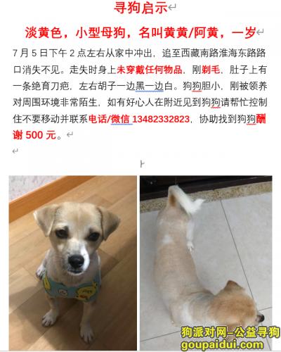 上海寻狗网,淡黄色串串母狗-西藏路淮海路附近走失,它是一只非常可爱的宠物狗狗,希望它早日回家,不要变成流浪狗。