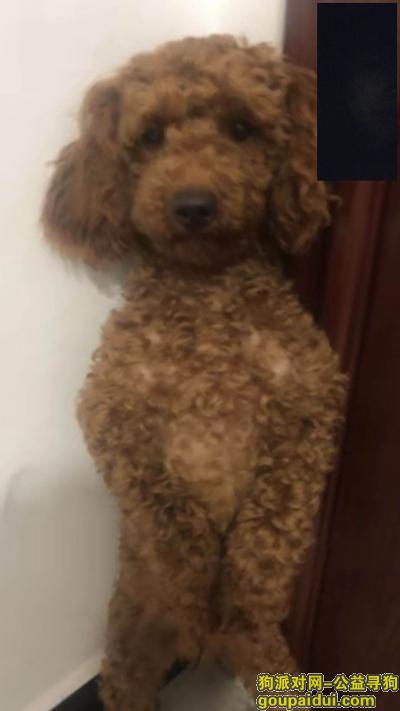 上海寻狗启示,本人爱犬走失,请好心人士帮忙转发。,它是一只非常可爱的宠物狗狗,希望它早日回家,不要变成流浪狗。
