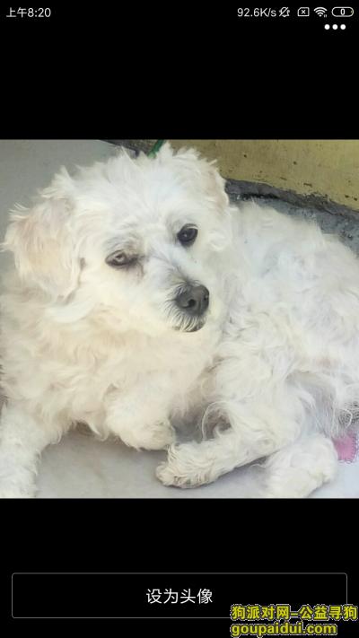 青岛寻狗网,崂山区北龙口村上午7点丢失一条泰迪,名叫阿旺,,你叫阿旺他会答应,它是一只非常可爱的宠物狗狗,希望它早日回家,不要变成流浪狗。