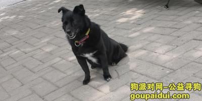 济南寻狗启示,找小黑,10岁,母,名字叫小黑,它是一只非常可爱的宠物狗狗,希望它早日回家,不要变成流浪狗。