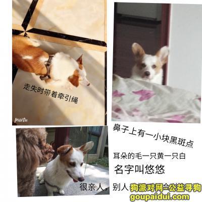 【南昌找狗】,南昌市青云谱区丢失柯基    母     10个月   名字叫悠悠,它是一只非常可爱的宠物狗狗,希望它早日回家,不要变成流浪狗。