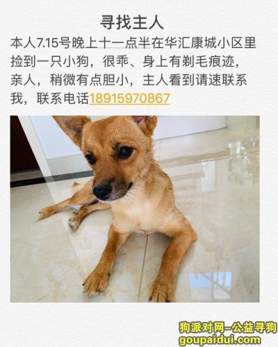 南京找狗主人,麒麟捡到狗,寻找主人,它是一只非常可爱的宠物狗狗,希望它早日回家,不要变成流浪狗。