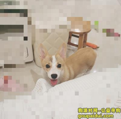 淄博寻狗启示,???????????????、,它是一只非常可爱的宠物狗狗,希望它早日回家,不要变成流浪狗。