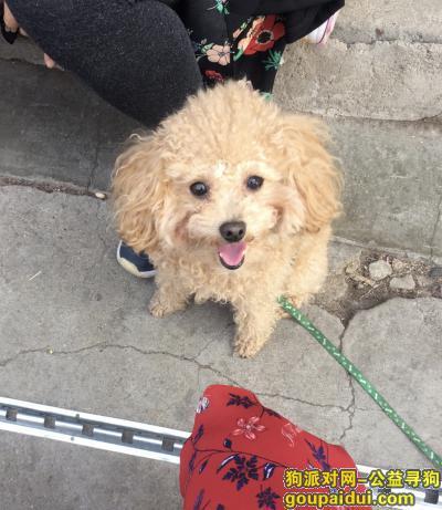 【沈阳找狗】,酬金1000寻找丢失泰迪,它是一只非常可爱的宠物狗狗,希望它早日回家,不要变成流浪狗。