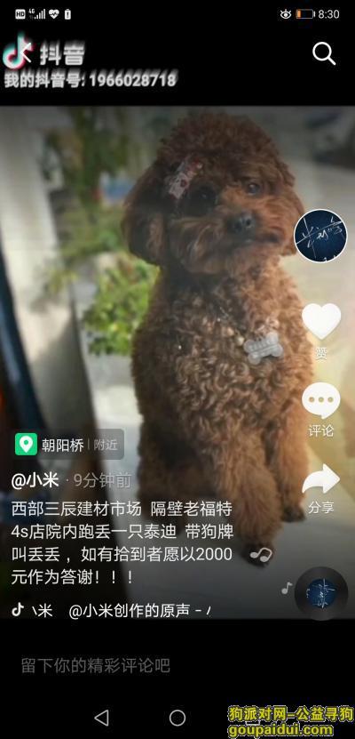 【榆林找狗】,西部三辰建材丢一只泰迪 带狗牌叫丢丢 如有拾到者愿以2000元作为答谢电话18891521207,它是一只非常可爱的宠物狗狗,希望它早日回家,不要变成流浪狗。