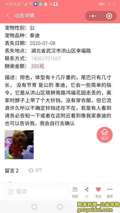 武汉寻狗启示,找   公    泰   迪,它是一只非常可爱的宠物狗狗,希望它早日回家,不要变成流浪狗。