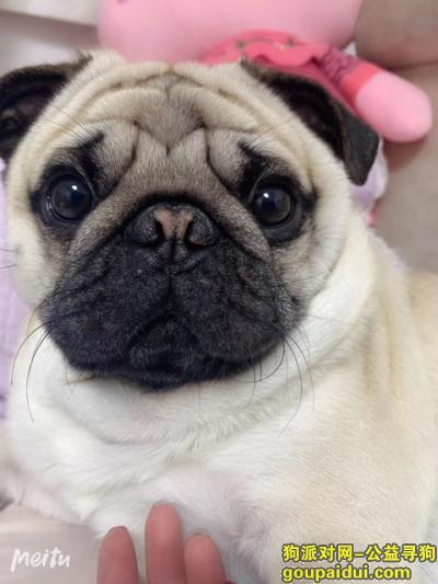 【长春找狗】,宽城区凯旋路 凯旋花园附近,它是一只非常可爱的宠物狗狗,希望它早日回家,不要变成流浪狗。