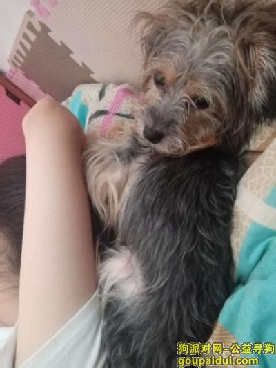 南宁找狗,黑黄小型雪纳瑞在南宁平西附近丢失,它是一只非常可爱的宠物狗狗,希望它早日回家,不要变成流浪狗。