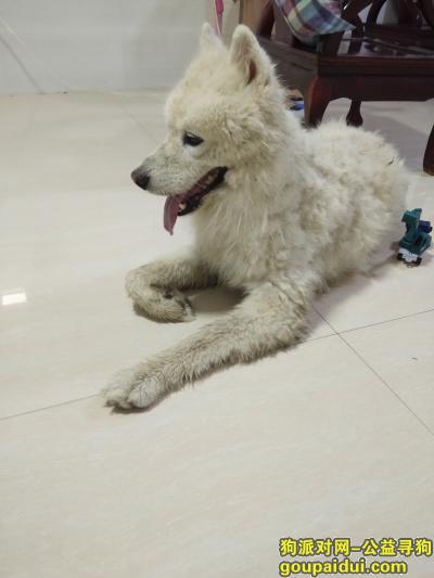 捡到狗,一条很通人性的狗  希望他的主人快来认领  朋友们帮忙转发 谢谢!,它是一只非常可爱的宠物狗狗,希望它早日回家,不要变成流浪狗。