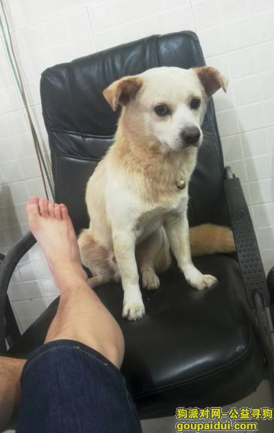 成都寻狗网,本人于金牛区旺泉街凌江尚府附近丢失一条中小型爱犬,它是一只非常可爱的宠物狗狗,希望它早日回家,不要变成流浪狗。