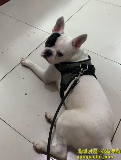嘉兴寻狗网,寻狗启示 爱犬爱犬爱犬 必有重谢,它是一只非常可爱的宠物狗狗,希望它早日回家,不要变成流浪狗。