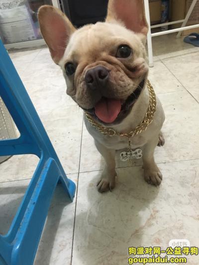 【厦门找狗】,寻狗启示有线索麻烦请联系我谢谢,它是一只非常可爱的宠物狗狗,希望它早日回家,不要变成流浪狗。