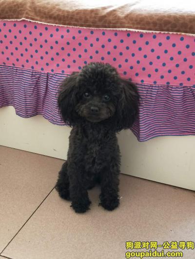 【包头找狗】,寻狗启事  黑色泰迪 瘦小 酬谢1000元,它是一只非常可爱的宠物狗狗,希望它早日回家,不要变成流浪狗。
