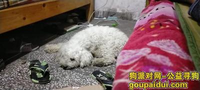 东莞丢狗,我家狗狗跑丢了,脖子上有一块伤口,短尾巴的,它是一只非常可爱的宠物狗狗,希望它早日回家,不要变成流浪狗。