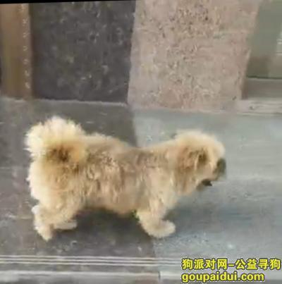 荆州找狗,小宝,你什么时候才可以回家,我想你了,它是一只非常可爱的宠物狗狗,希望它早日回家,不要变成流浪狗。