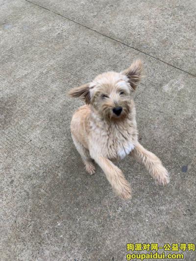 武汉寻狗网,丢失一只雪拉瑞杂种串串狗,白色,毛特长,高度在膝盖附近, 眼睛附近有小片树叶沾上,它是一只非常可爱的宠物狗狗,希望它早日回家,不要变成流浪狗。