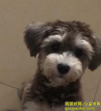 洛阳找狗,摆脱带走我狗子的人 把狗还给我吧 不会追究责任的,它是一只非常可爱的宠物狗狗,希望它早日回家,不要变成流浪狗。