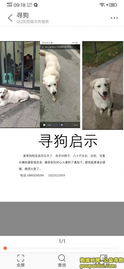 【重庆找狗】,我家胖子,走丢七天了,求求好心人帮帮我。,它是一只非常可爱的宠物狗狗,希望它早日回家,不要变成流浪狗。