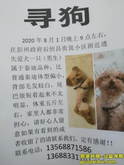 【成都找狗】,彭州市政府后恒昌贵筑小区附近丢失爱犬泰迪一只,它是一只非常可爱的宠物狗狗,希望它早日回家,不要变成流浪狗。